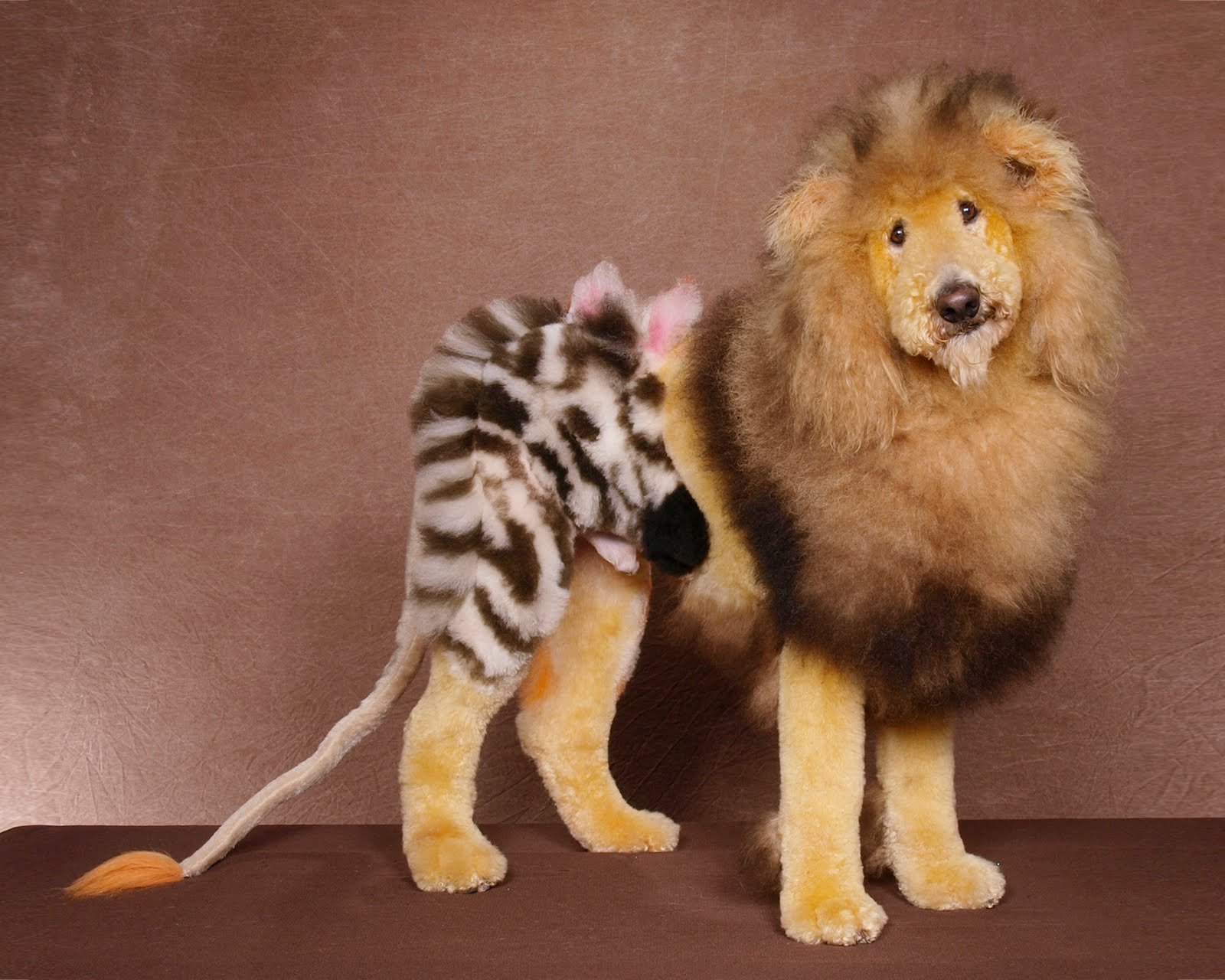 Creative Dog Grooming Lion