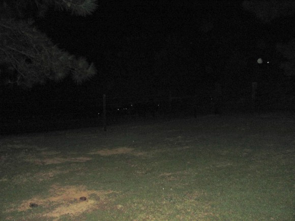 See the glowing eyes?  Those are cows!