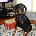 Repeat Delivery Service for Pets for Petco #PetcoDelivers